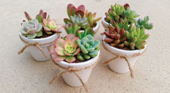 succulents-for-weddings